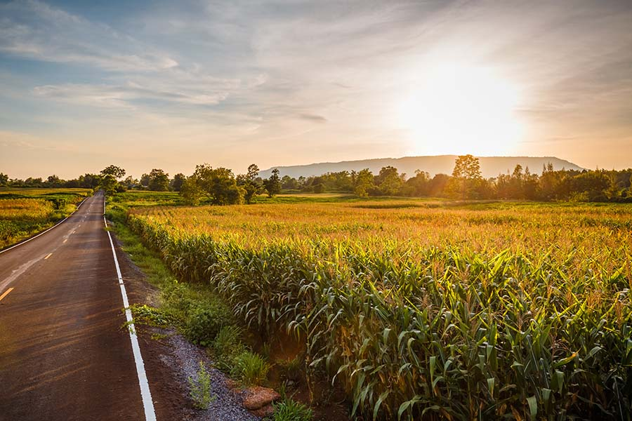 Contact - View Of An Empty Road Next To Corn Field At Sunset